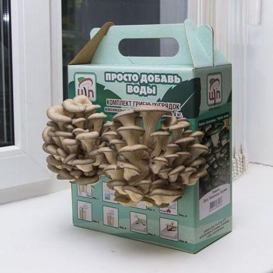 Набор для выращивания грибов Грибная коробка (Вешенка обыкновенная)