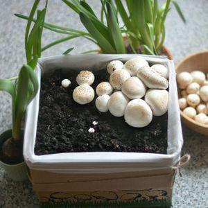 Набор для выращивания шампиньонов Gribox