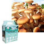 Набор для выращивания грибов Грибная коробка