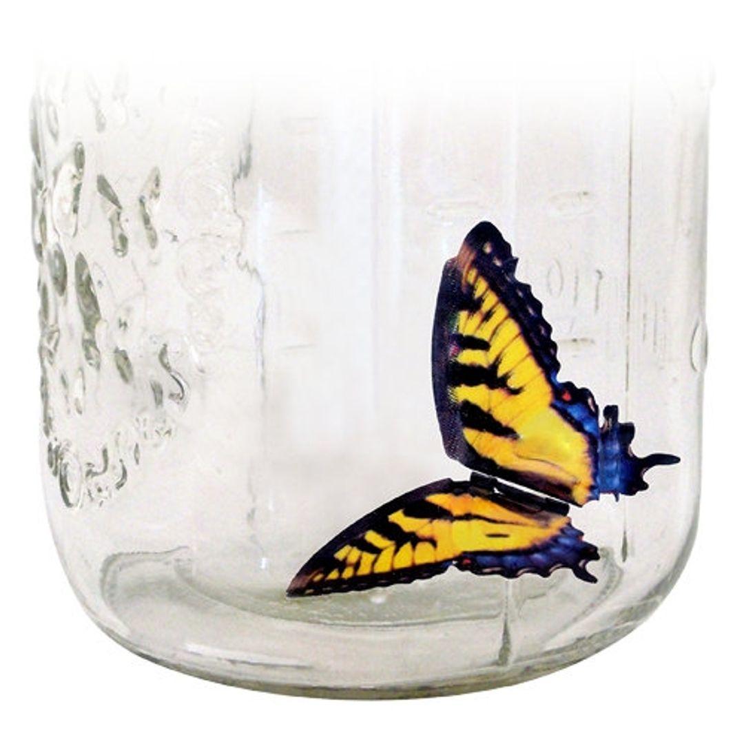 Бабочка в банке Желтая Тигровый парусник