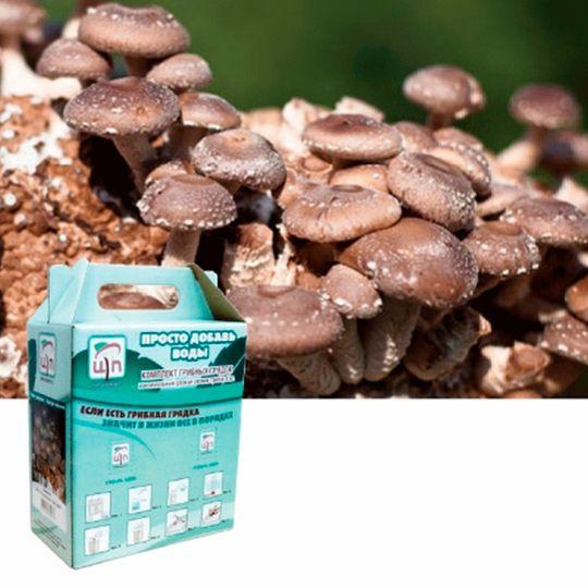 Набор для выращивания грибов Грибная коробка (Шиитаке)