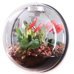 Настенный флорариум Flandriss Miniball Black