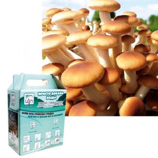 Набор для выращивания грибов Грибная коробка (Агроцибе)