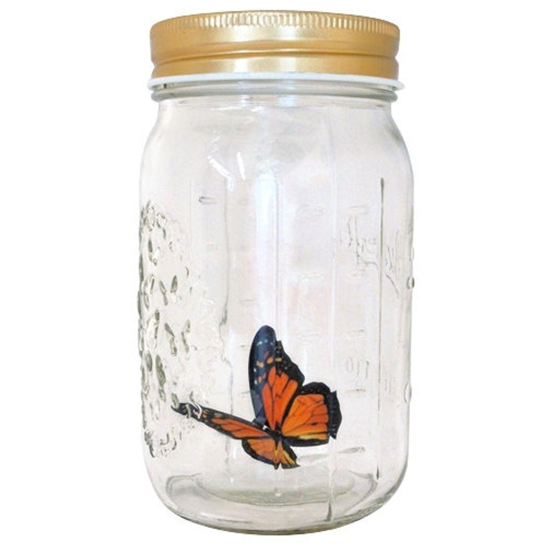 Бабочка в банке Оранжевая Монарх