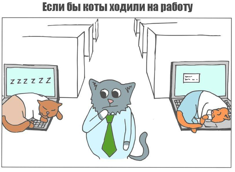 Кружка Кот в интернет-магазине Мистер Гик