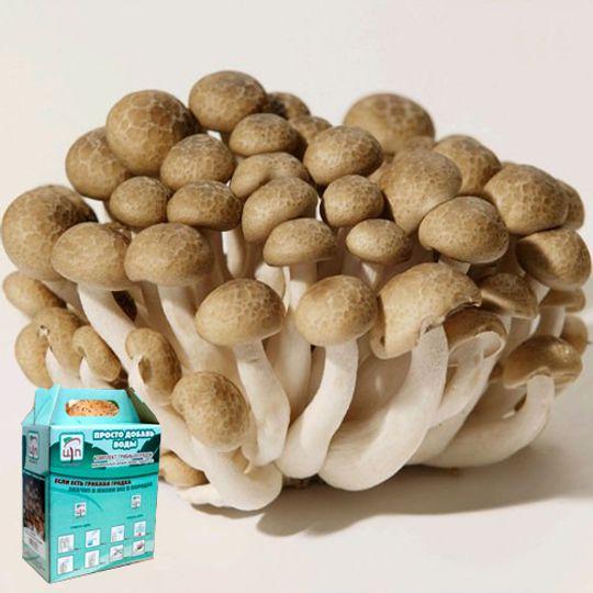 Набор для выращивания грибов Грибная коробка (Опята мраморные)