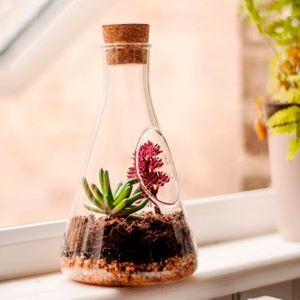 Настольный террариум для растений Chemistry Terrarium Kit
