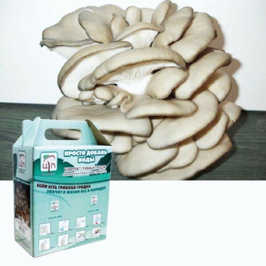 Набор для выращивания грибов Грибная коробка (Хитчер)