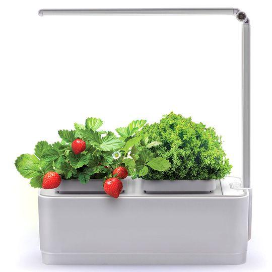 Умный сад для выращивания растений iGarden LED
