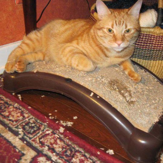 Когтеточка для кошек EmeryCat