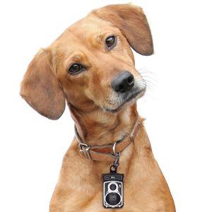 Подвеска для ошейника Roll Dog