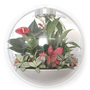 Настенный флорариум Flandriss Miniball Gray