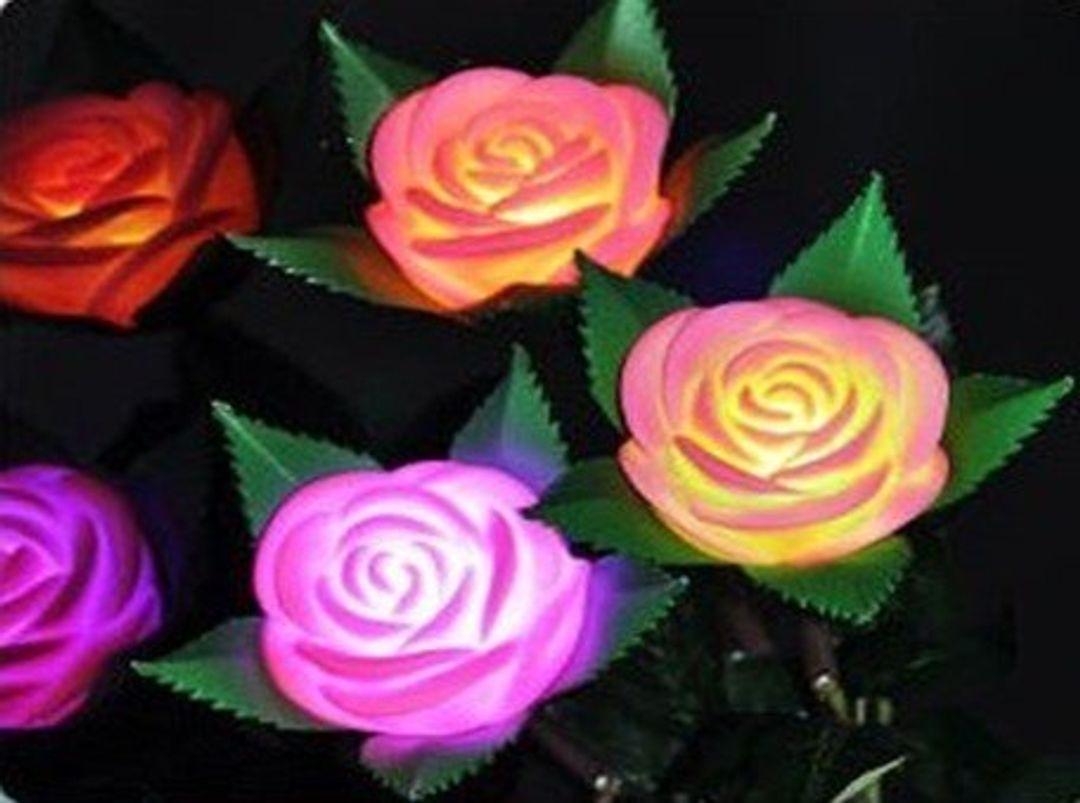 Роза Светящаяся
