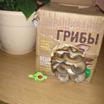 Набор для выращивания грибов Грибная коробка Отзыв