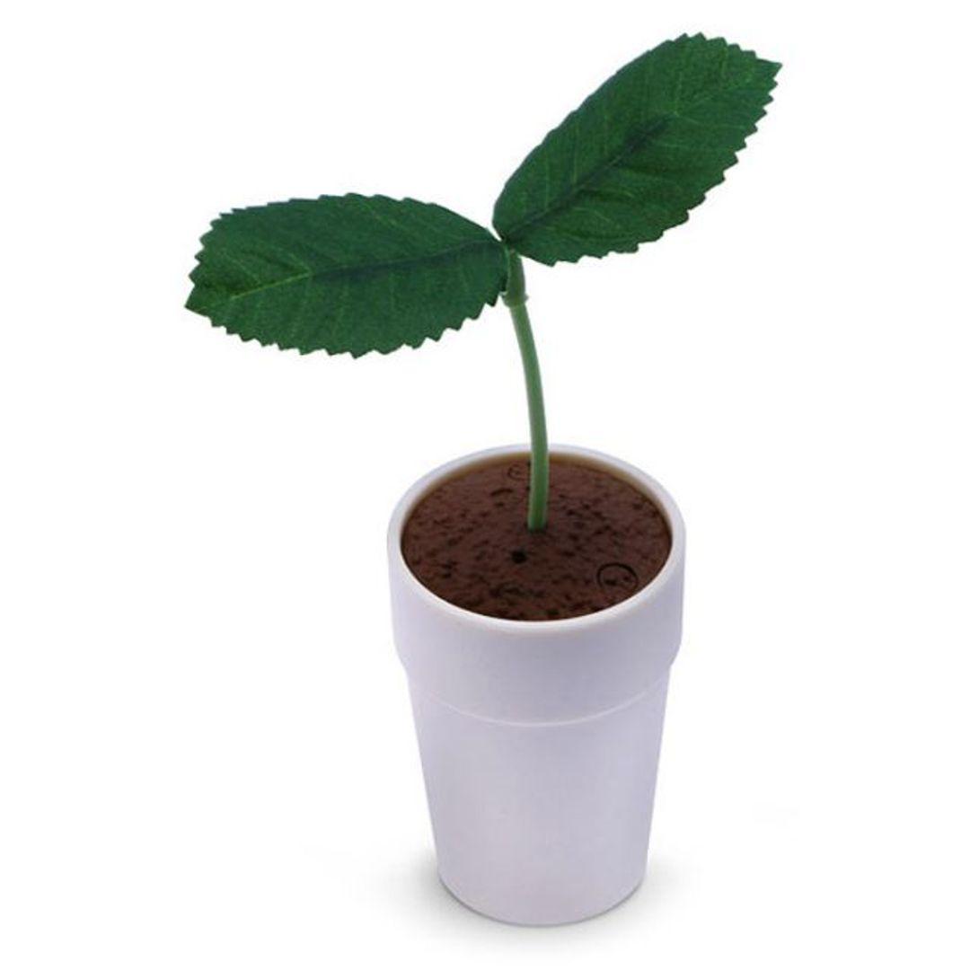 Цветок Pekoppa Plant