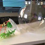 Электронная рыбка в банке  Отзыв