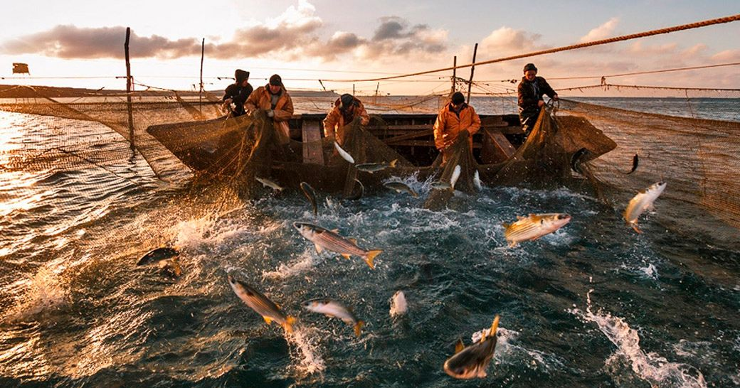Рыбаки ловят рыбу сетью