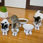 Коты едят из мисок на лапках