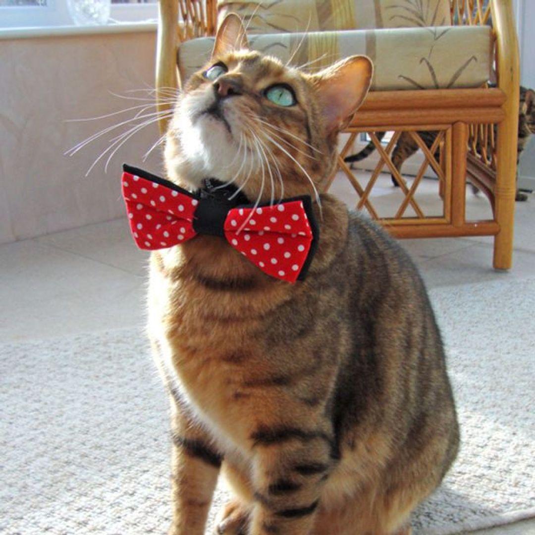 Галстук-бабочка для домашних питомцев Pet Bow Tie