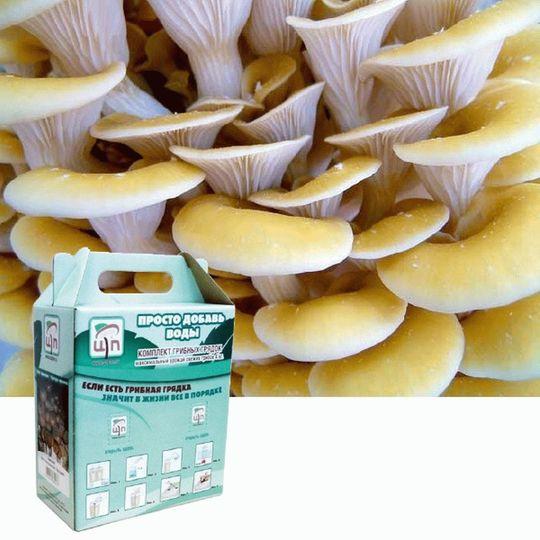 Набор для выращивания грибов Грибная коробка (Вешенка лимонная)